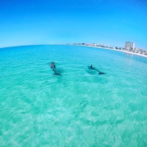fort walton beach waverunner dolphin tour